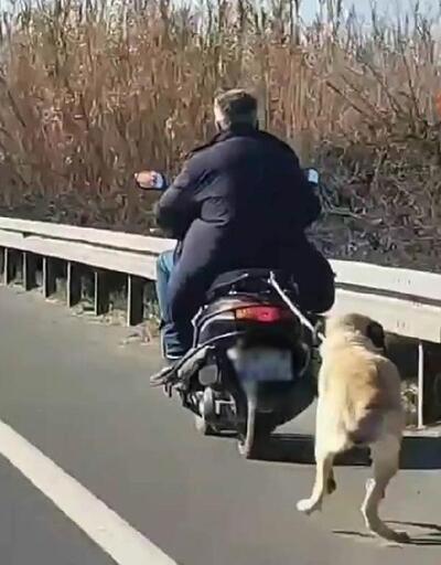 Motosikletle sürüklenen köpek ölmek üzereyken bulundu