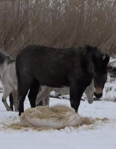 Sahipsiz atlara bakıcı aranıyor