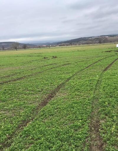 Magandalar tarım alanında zarara sebep oldu!