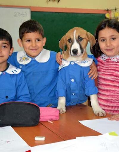 Okul forması giydirilen köpek sınıfın maskotu oldu