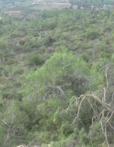 Mersin'de ağaç katliamı