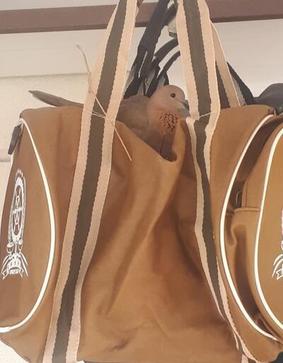 Kuşlar çantanın içine yuva yaptı