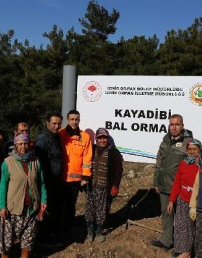 İzmir'in dağlarında 'bal ormanları' yeşeriyor