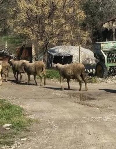 Bursa'da karantina sona erdi