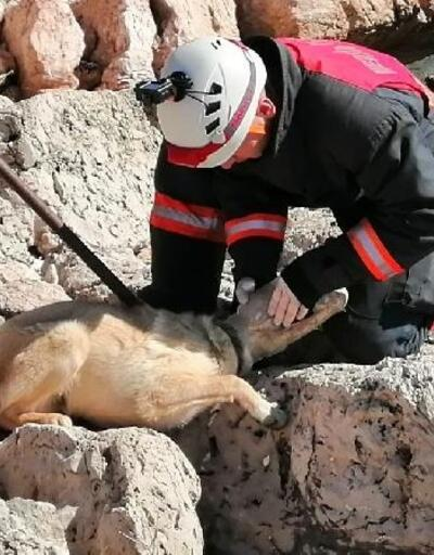 Kafası bidona sıkışan köpek kurtarıldı