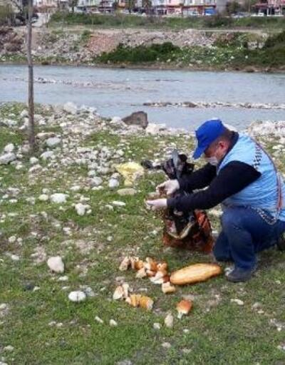 Sokak hayvanlarına mama ve ekmek bırakıldı