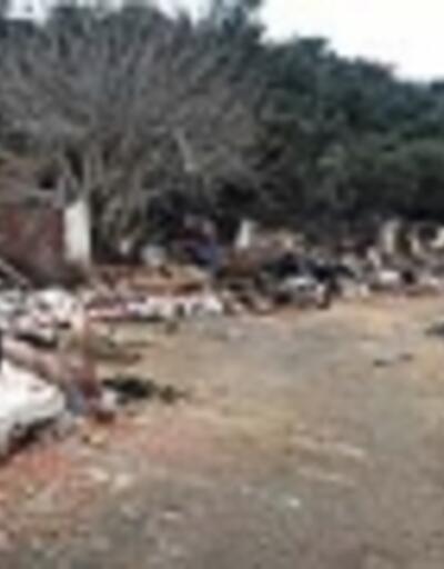 Ahırlar yıkıldı, atlar Büyükada'ya götürüldü