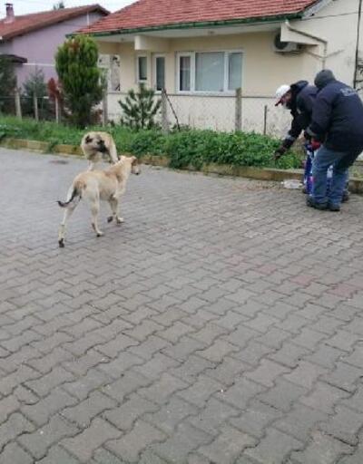 Kırklareli'de sokak hayvanları unutulmuyor