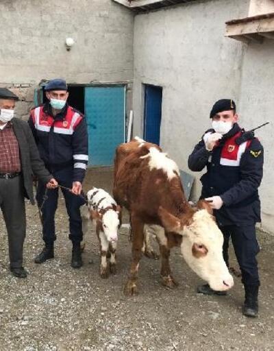 Sorgun'da çalınan hayvanlar sahibine teslim edildi, 5 kişi gözaltına alındı