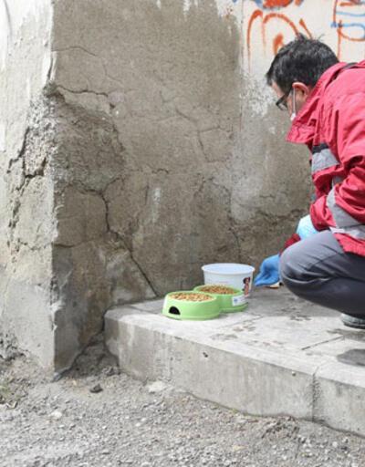 Bayburt'ta sokak hayvanları için mama, yiyecek ve su bırakıldı