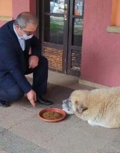 Belediye başkanı ilçedeki sokak hayvanlarını besledi