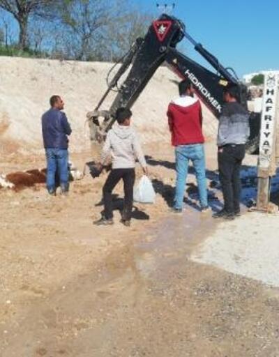 Adıyaman'da batağa saplanan inek kurtarıldı