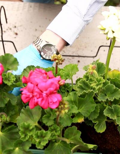 Çiçek yetiştiriciliğine ilgi arttı