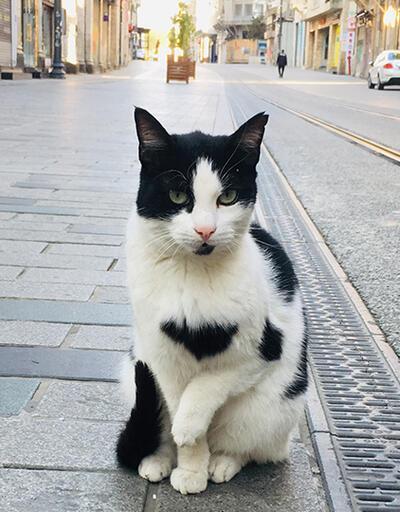 Hayvanların sokaklardaki halleri yürekleri ısıttı