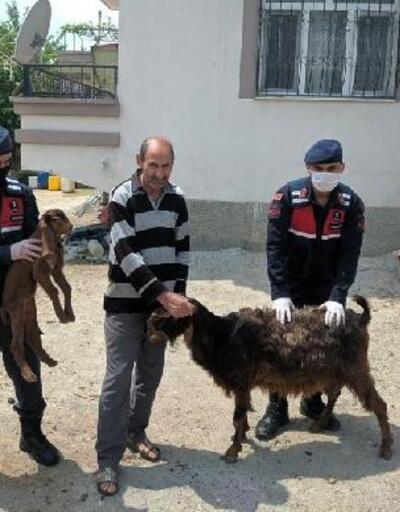 Kiralık araçla hayvan hırsızlığı
