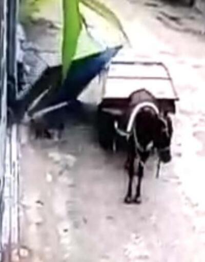 At arabası ile hırsızlık kameraya takıldı