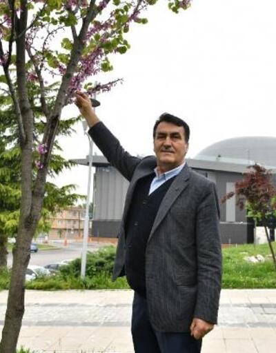 Bursa'da 'erguvan' mevsimi başlıyor