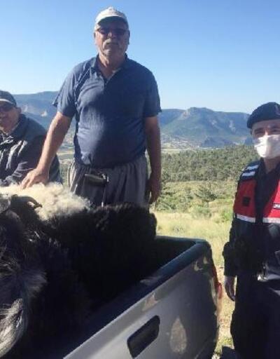 Kaybolan 6 küçükbaş, bulunarak sahibine teslim edildi