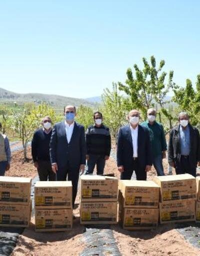 Konya Büyükşehir'den çiftçiye çilek fidesi desteği