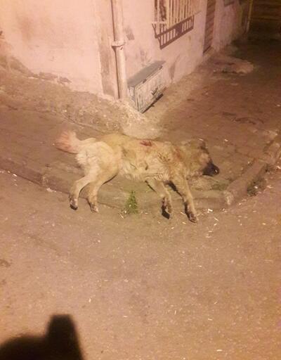 Mahallelinin maskotu 'olan köpeği bıçaklayarak öldürdü