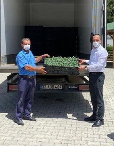 Düziçi'nde çiftçilere 73 bin adet domates fidesi dağıtıldı