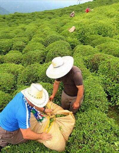 2 günde 9 bine yakın çay üreticisi geldi