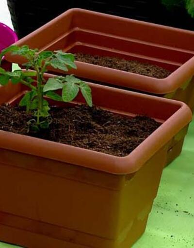Tohum ve fide ekiminin incelikleri