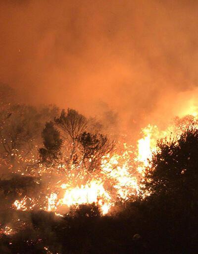 Son dakika... Turizm ilçesinde orman yangını