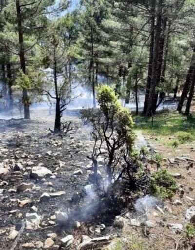 Çoban ateşi orman yangını çıkardı
