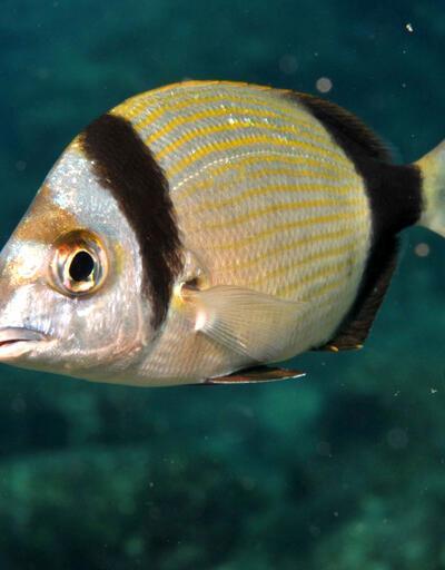 Son dakika... Denizlerde balık türleri artmaya başladı