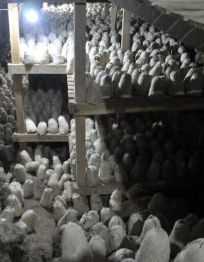 Fransızların 'rokfor' peynirine rakip Divle obruk peyniri, mağaraya bırakıldı