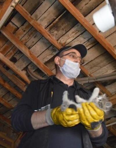 Çatıda mahsur kalan kediyi itfaiye kurtardı