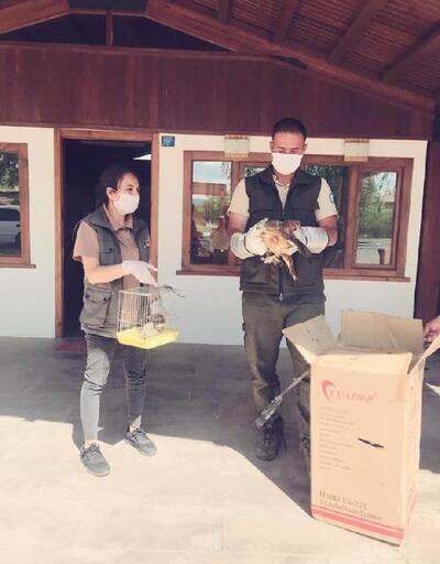 Bakıma muhtaç halde bulunan baykuş ile kızıl şahin tedavi edildi