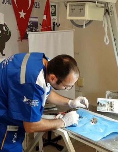 Görme yetisini kaybeden kedi, kanamasız bir şekilde ameliyat edildi