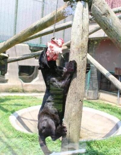 Darıca'da hayvanat bahçesine az ziyaretçi alınacak