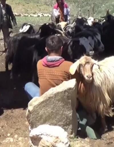 Hayvan ithalatına kısıtlama   Video