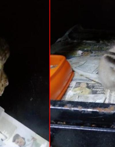 Aracın çarptığı tilki yavrusu ile yaralı bulunan atmaca tedavi edildi