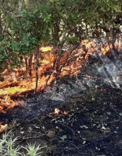Gerger'de korkutan orman yangın