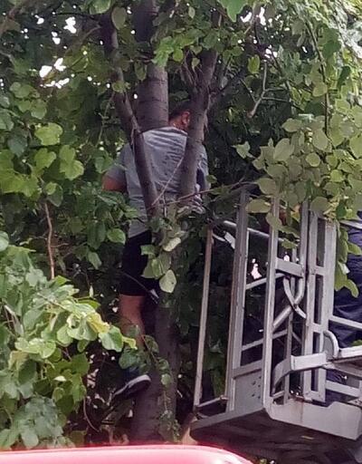 Ihlamur ağacında baygınlık geçirdi