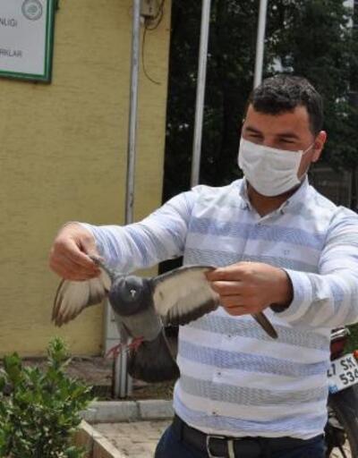 Duvara çarpan güvercin tedavi altına alındı