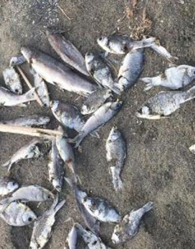 Hatay'da korkutan görüntü! Balıklar sahile vurdu