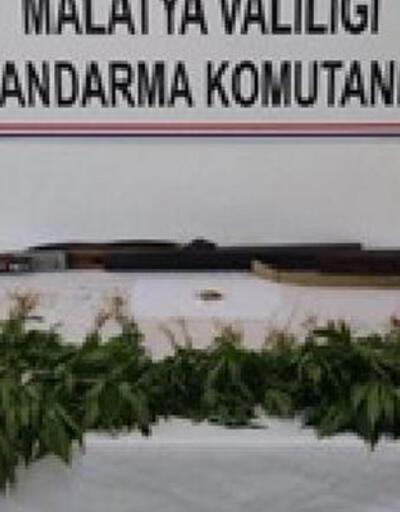 Malatya'da 327 kök kenevir ele geçirildi, 2 kişi gözaltına alındı