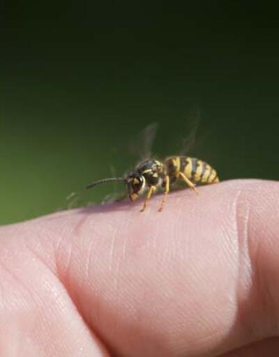 Arı sokmasına ne iyi gelir? Evde yapılacak yöntemler