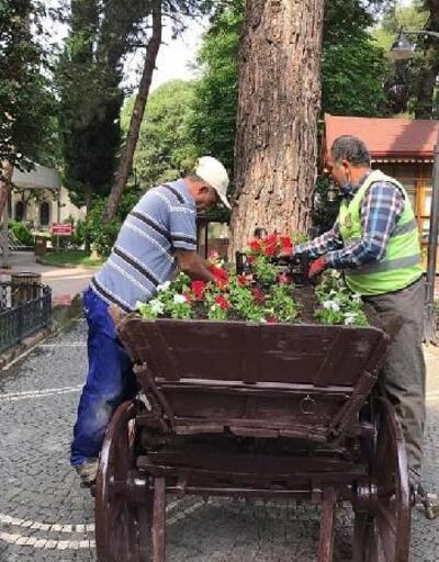 Amasya'da 40 bin mevsimlik çiçek açtı