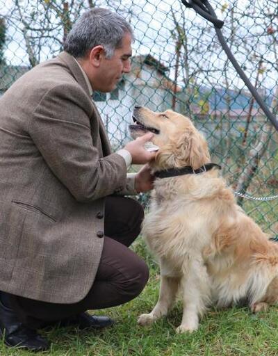 Son dakika... Kanseri koklayarak teşhis edecek köpekler yetiştiriliyor