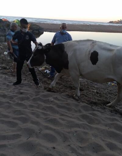Bataklığa saplanan ineği ekipler kurtardı