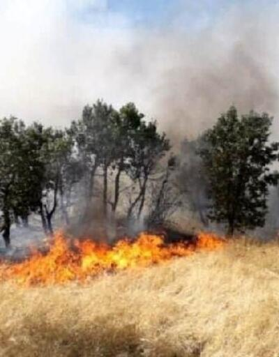Çüngüş'te 300 dönümlük alan yandı