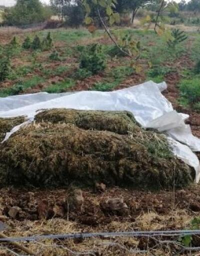 Bakan Soylu açıkladı: 1,5 ton esrar ele geçirildi