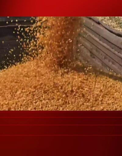 Son Dakika! Bakan Pakdemirli mısır alım fiyatını açıkladı   Video