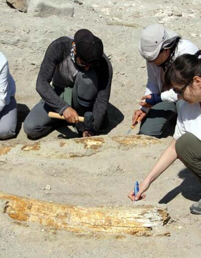 Son dakika... Kazı çalışmaları yeniden başladı; 7,5 milyon yıllık 2 fosil daha bulundu